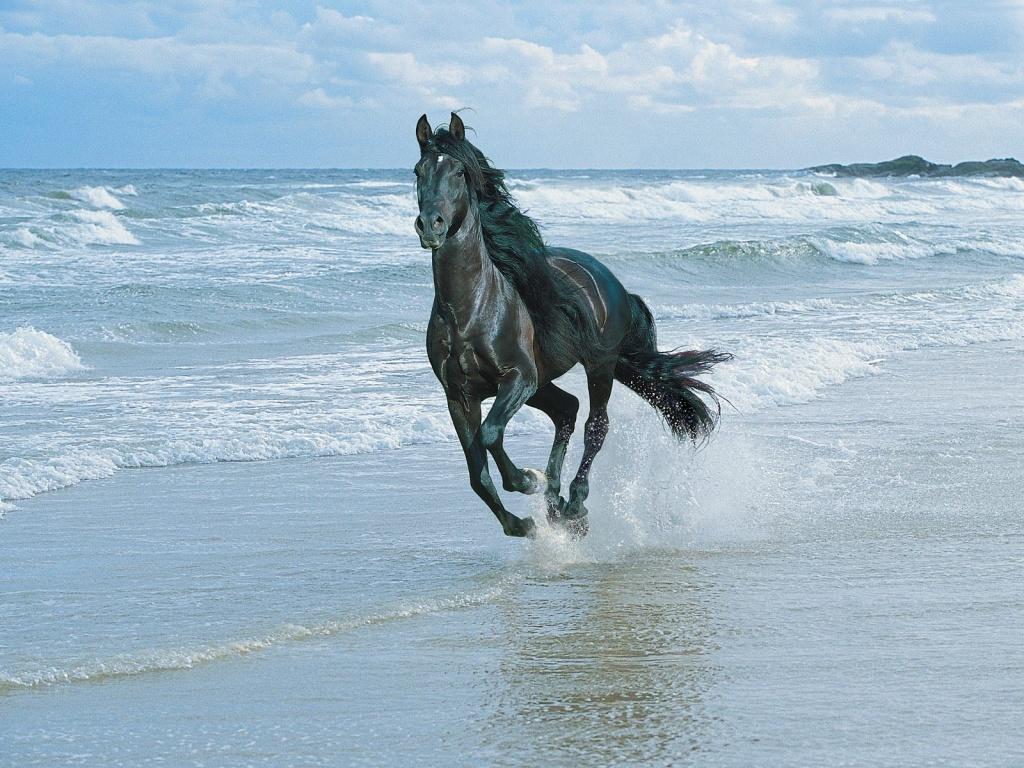 ... los caballos son unos animales muy bonitos aqui les dejo unas imagenes