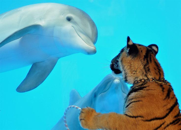 delfinas-y-tigre